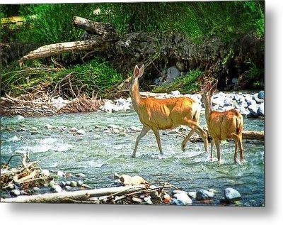 Deer Crossing Metal Print by Cheryl Cencich