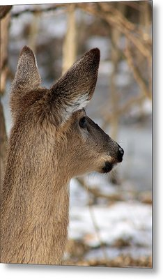 Deer Day Dreamer Metal Print
