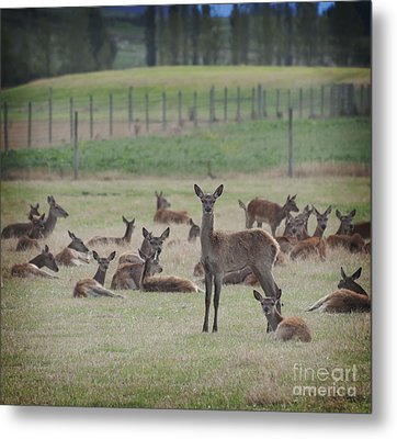 Deer In Grass Metal Print