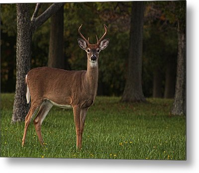 Metal Print featuring the photograph Deer In Headlight Look by Tammy Espino