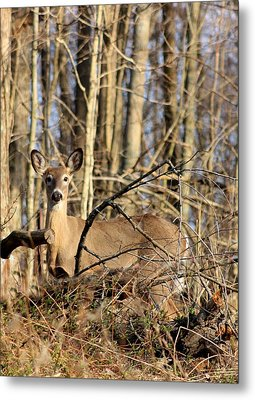 Deer In The Woods Metal Print by Diane Merkle