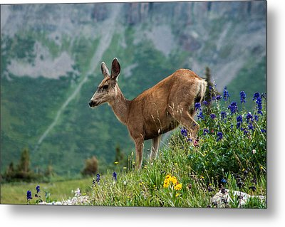 Metal Print featuring the photograph Deer by Jay Stockhaus