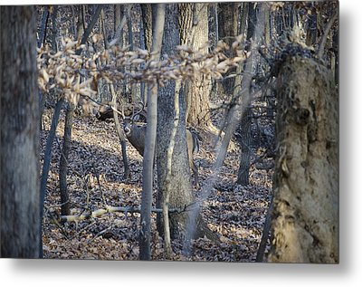 Metal Print featuring the photograph Deer by Michael Donahue