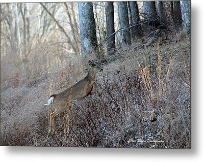 Deer Moving Upward Metal Print by Lorna Rogers Photography
