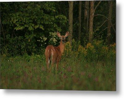 Metal Print featuring the photograph Deer Muskoka by Paula Brown