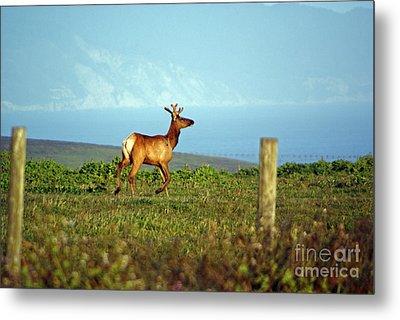 Deer On The Rune Metal Print