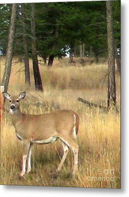 Deer Strikes A Pose Metal Print by Gail Matthews