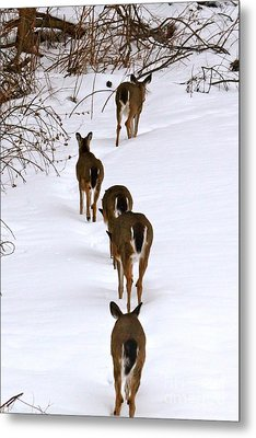 Deer Trail Metal Print