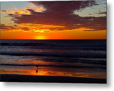 Del Mar Sunset Metal Print by Randy Bayne