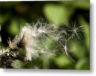 Delicacy  Metal Print by John Holloway
