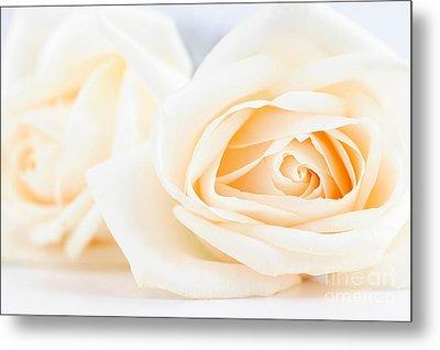 Delicate Beige Roses Metal Print by Elena Elisseeva