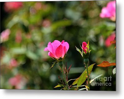 Delicate Blossom Metal Print by Theresa Willingham
