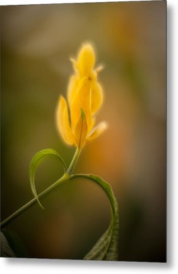 Delicate Fountain Of Gold Metal Print by Mike Reid