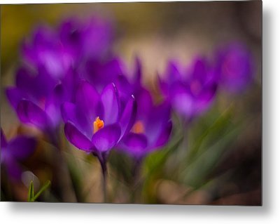 Delicate Purples Metal Print by Mike Reid