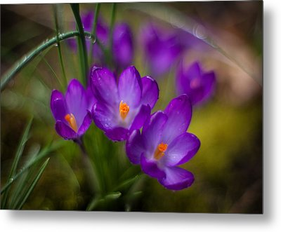 Delicate Spring Colors Metal Print by Mike Reid