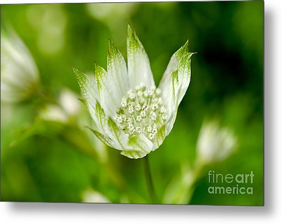 Delicate Spring Time Flower Metal Print by Terry Elniski