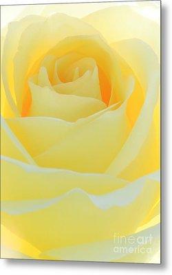 Delicate Yellow Rose Metal Print by Sabrina L Ryan