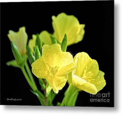 Delicate Yellow Wildflowers In The Sun Metal Print by David Perry Lawrence