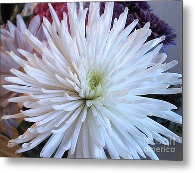 Delicate Yet Strong Metal Print by Angelia Hodges Clay