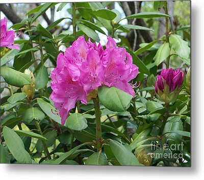 Metal Print featuring the photograph Delicate Beauty by Roberta Byram