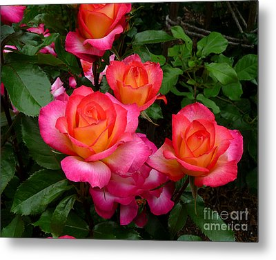 Delicious Summer Roses Metal Print by Richard Donin