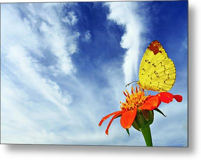 Delight Metal Print by Suradej Chuephanich