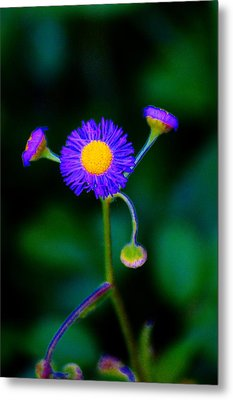 Delightful Flower Metal Print