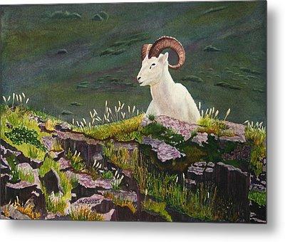 Denali Dall Sheep Metal Print