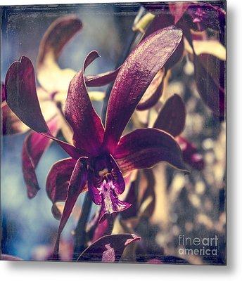 Dendrobium Black Spider Orchid Hawaii Metal Print by Sharon Mau