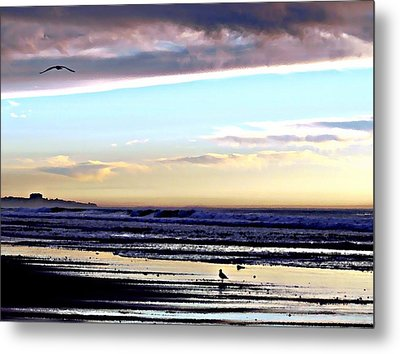 Descendants As Many As The Sand On The Shore Of The Sea Metal Print by Sharon Soberon