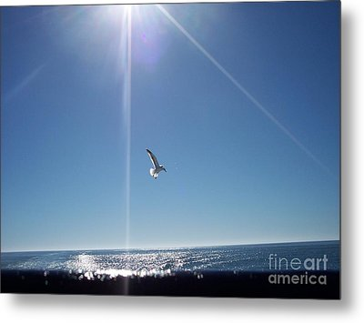 Descending Gull Metal Print