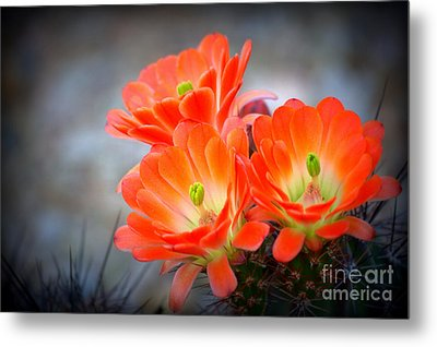 Desert Ablaze  Metal Print by Ruth Jolly