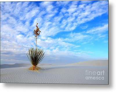 Desert Beauty White Sands New Mexico Metal Print by Bob Christopher