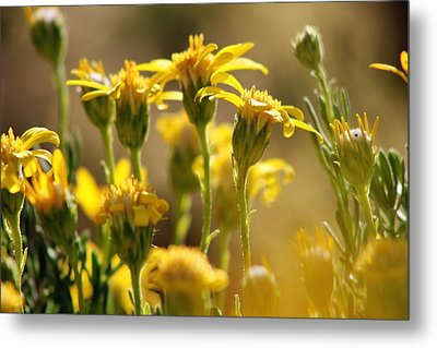 Desert Bloom At Black Rock Canyon In Jtnp Metal Print