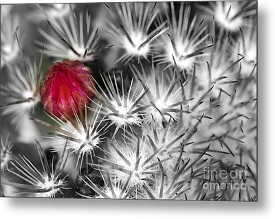 Desert Bloom Bw Metal Print by C Ray  Roth