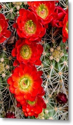 Desert Blooms Metal Print by Teri Virbickis