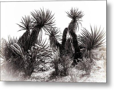 Desert Cactus Metal Print by Brenda Giasson