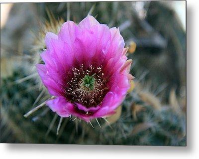 Desert Flower 1 Metal Print