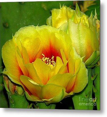 Desert Flower Metal Print