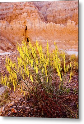 Metal Print featuring the photograph Desert Flower by Jim Snyder