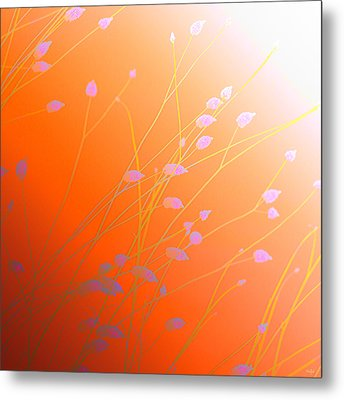 Metal Print featuring the photograph Desert Flowers by Holly Kempe
