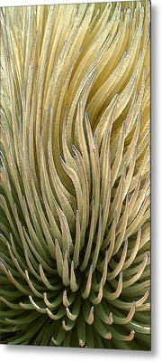Desert Green Metal Print by Ben and Raisa Gertsberg