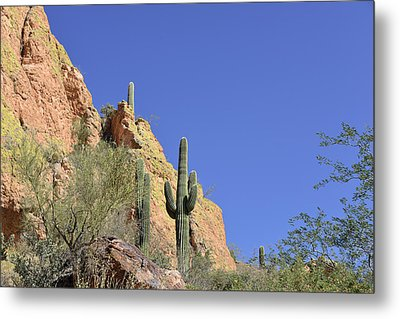 Desert Plants Of The Superstitions Metal Print