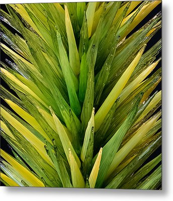 Metal Print featuring the photograph Desert Tree by Glenn DiPaola