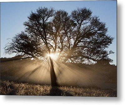 Desert Tree Metal Print by Max Waugh