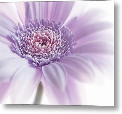Close Up White Pink Flowers Macro Photography Art Metal Print by Artecco Fine Art Photography