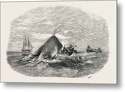 Destruction Of The Larboard Boat Of The Ann Alexander Metal Print by English School