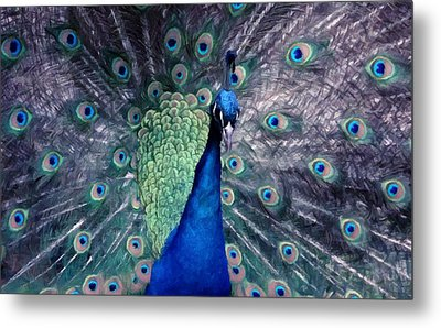 Detail Of Beautiful Peacock With Feathers Metal Print by Lanjee Chee