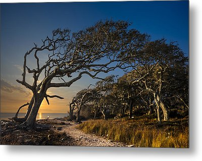 Determination Metal Print by Debra and Dave Vanderlaan
