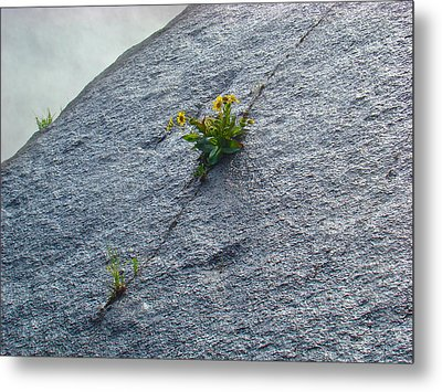 Metal Print featuring the photograph Determination by Paul Foutz
